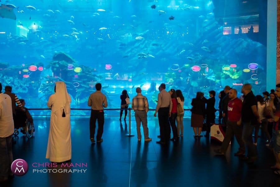 World's biggest piece of acrylic at the Dubai Aquarium