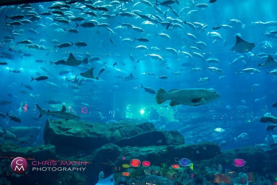 Dubai Aquarium has many different species of fish on display